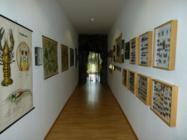 naturkundeausstellung3